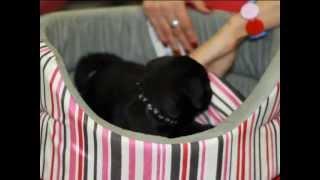 Все О Домашних Животных: Необходимые Вещи
