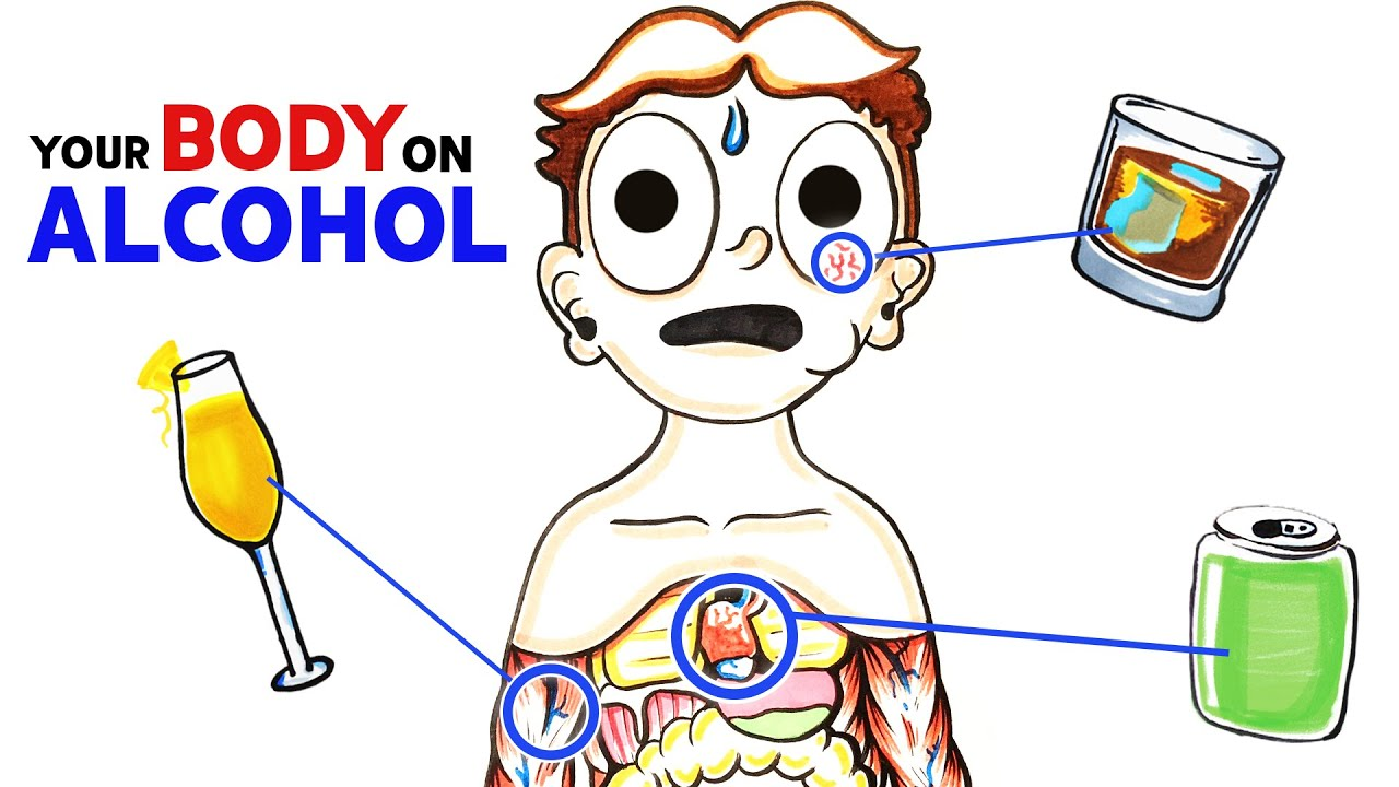 How Alcohol Changes Your Body