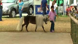 Caballos Miniatura - Mini Horses - Ponys - TvAgro por Juan Gonzalo Angel
