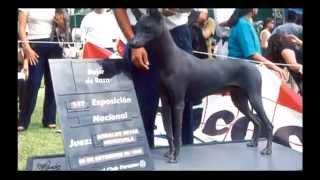 Sucedió en e Perú: El Perro en el Perú