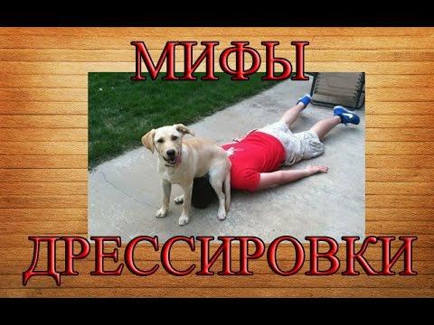 Мифы в дрессировке собак