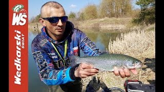 Łowienie pstrągów tęczowych - Porady i przynęty zawodników