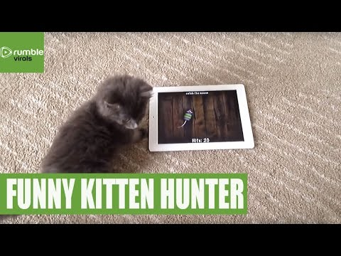 Kitten really into tablet game