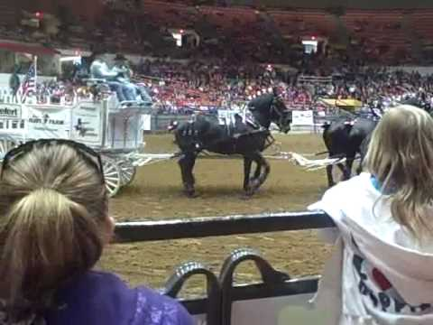 Taxis thunder and the world famous Percheron's