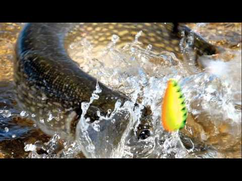 North dakota game and fish youtube for Nd fishing buddy
