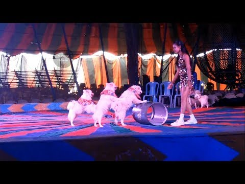 Circus Show With Animals Full Entertainment
