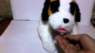 Pupy Anjing Pintar