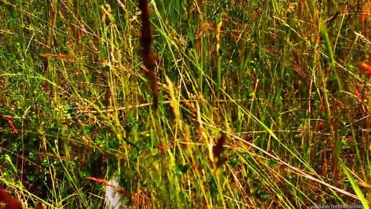 Wildwiese bei Waren an der Müritz in Mecklenburg Vorpommern