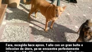 Asociacion La Sonrisa Animal de Sevilla TE NECESITAN -(1 parte )