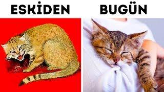 Kediler Bizi Nasıl (İki Kez!) Evcilleştirdi
