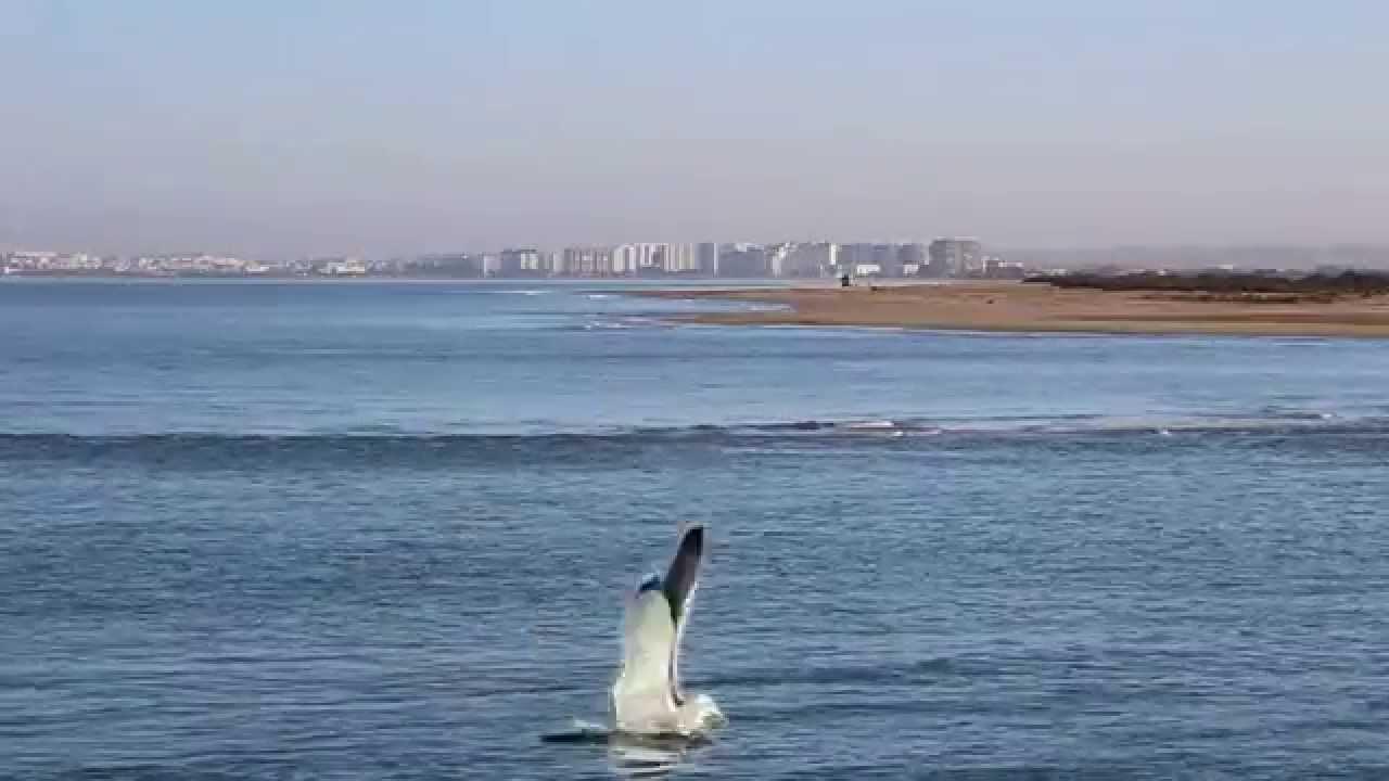 Sirenas reales encontradas vivas grabadas - YouTube