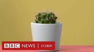 Ўзбекистон ва дунё: Эмлаш нима учун керак? - BBC Uzbek