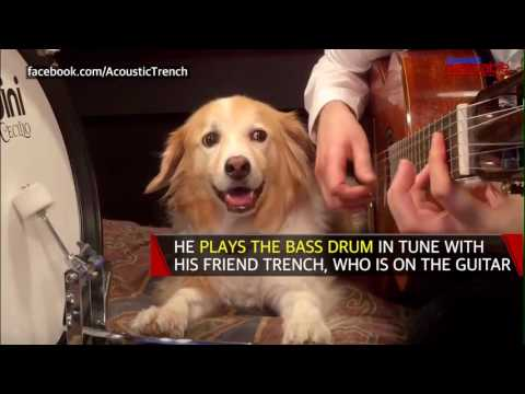 Watch this rockstar puppy plays the drums