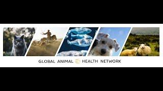 Global Animal Health Network Intro Video