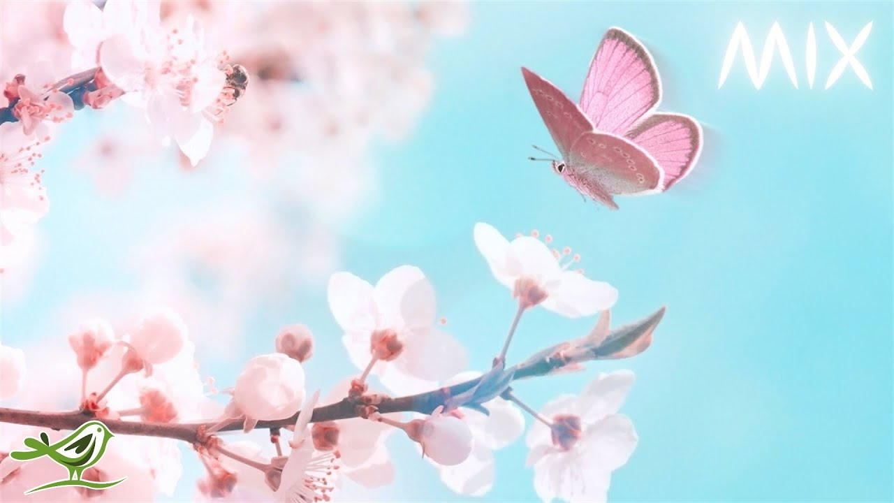 Peaceful music mix • Relax in a field of flowers