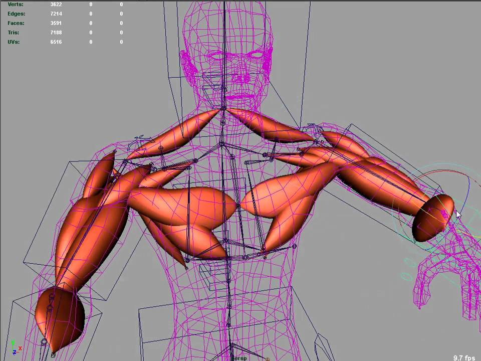 muscle rigging