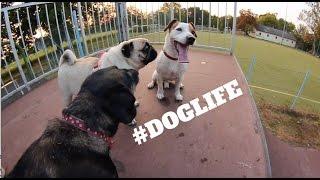 SKATEPARK DOGS !!!!!