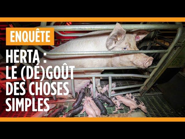 Herta : le (dé)goût des choses simples. Enquête dans un élevage de cochon Herta.
