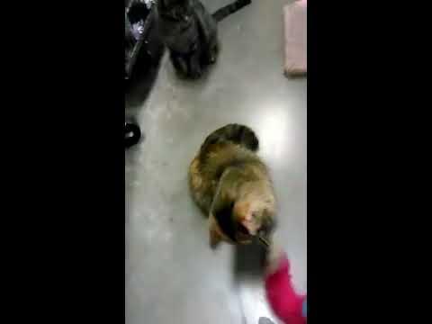 Pet Smart cats 2