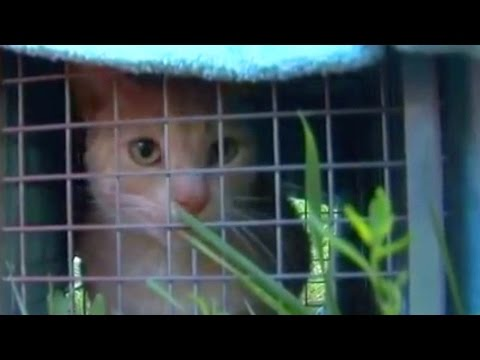 Cat Hoarding Case in Wyoming