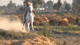Repeat youtube video Baddowal  Horses Races.