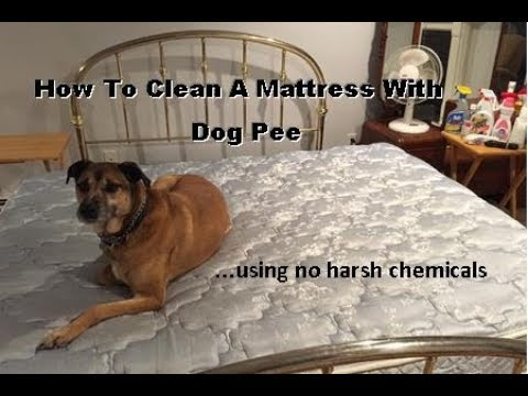 How To Clean A Mattress With Dog Pee