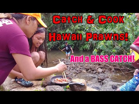 CATCH & COOK Hawaii PRAWNS And A BASS Fish Catch And Release | Family Outdoor Fun Vlog| Kauai Island