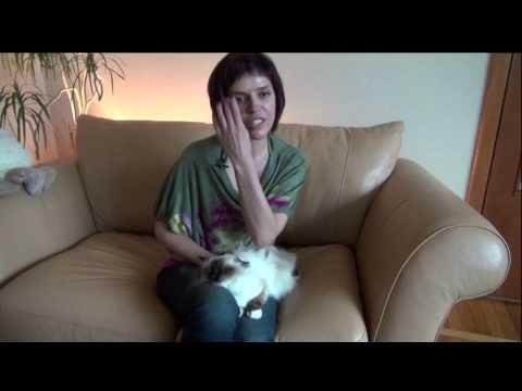 Cats&DogsTV - УДИВИТЕЛЬНЫЙ МИР КОШЕК - СВЯЩЕННАЯ БИРМА / SACRED BIRMAN CATS