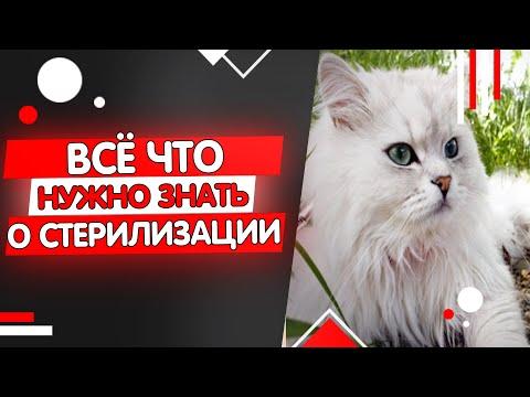 Вопрос: Когда кошку можно стерилизовать?