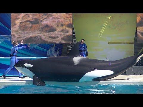 One Ocean (Full show/Full HD) Sept 7 2014 - 12pm SeaWorld San Diego