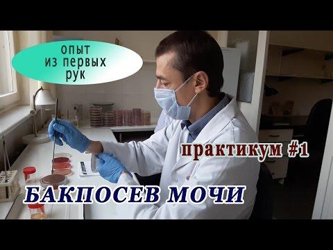 Бактериологическое исследование мочи (бакпосев). Практикум #1