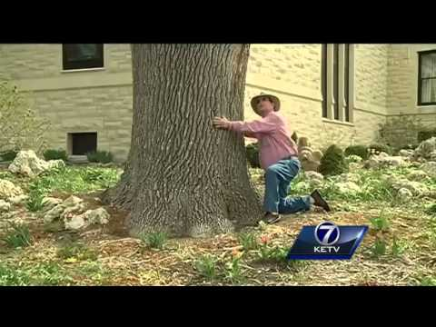 Omaha plants trees for Arbor Day