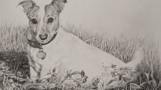 TOBIE - A Jack Russell Terrier 5 Pencil Method Graphite Drawing Demonstration