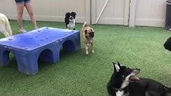 Dog Boarding in Mesa AZ