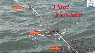 Chuyện lạ ! Chú vịt siêu thông minh biết đi bắt cá cùng chủ nhân | CÔ TEN VLOG