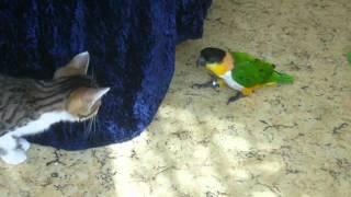 Котенок и попугай 2