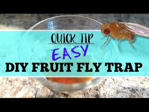 quick tip diy best ever fruit fly trap youtube. Black Bedroom Furniture Sets. Home Design Ideas