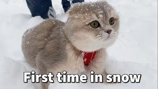 A Scottish Fold cat first time in Lake Tahoe seeing snow and walking in snow | Cats and Snow