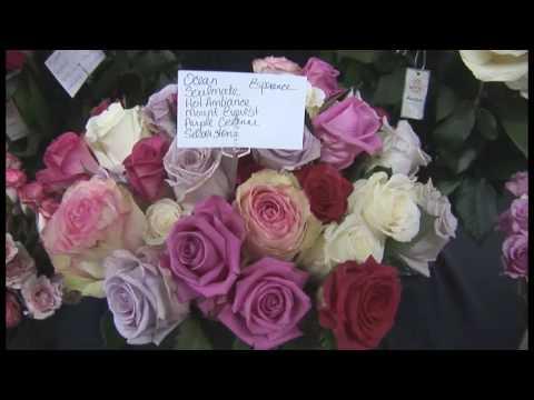 Royal Flowers - Denver Wholesale Florists 100th Anniversary 5/31/09 - Part 17