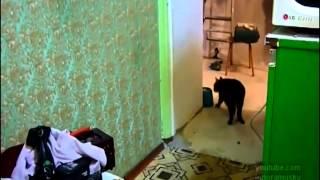 會主動幫主人接電話的小貓 MM1768