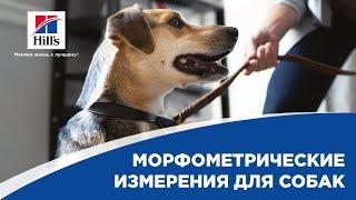 Морфометрические измерения для собак