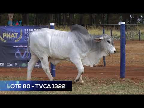 LOTE 80 - TVCA1322 - TABAPUÃ