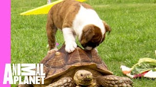 Puppy Pals Are the Bestest Pals thumbnail