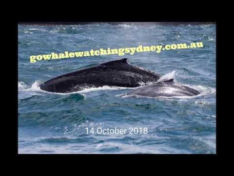 Go Whale Watching Sydney Australia