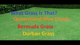 [What Grass Is That] [Queensland Blue Couch] [Couch Grass] [Bermuda Grass] [Durban Grass]