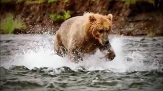 Spirit Animal ~Bear~Native American Music -Niall