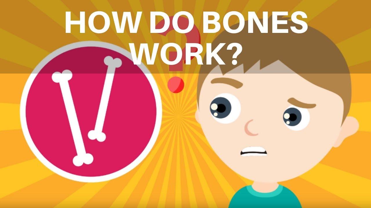 medium resolution of How Do Bones Work? Human Skeleton Facts for Kids - YouTube