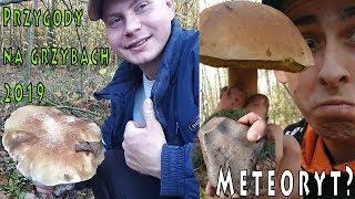 To jest GRZYBOBRANIE 2019 - Grzybia życiówka - przygody w lesie