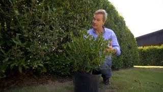How to Grow Hedge Screens | At Home With P. Allen Smith