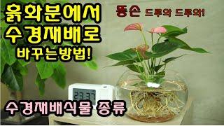 흙화분에서 수경재배로 바꾸는 방법 수경재배식물 종류 알…